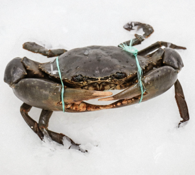 Live Mud Crab (min 900 gr)