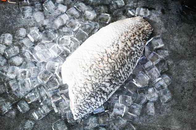 Barramundi Side Fillet (900-1 kg)