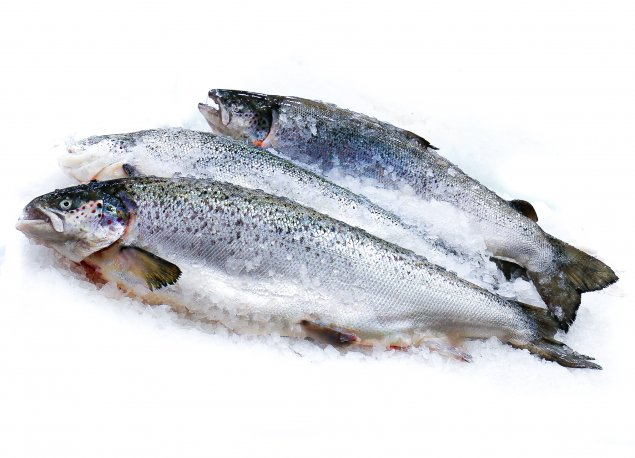 Whole Salmon (3.1 - 3.5kg) SPECIAL
