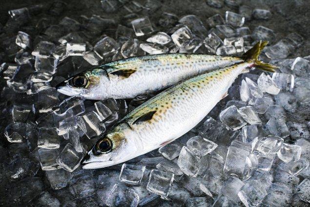 Whole Blue Mackerel (1Kg)