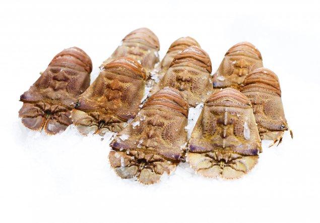 Raw Moreton Bay Bugs (Min 1kg)
