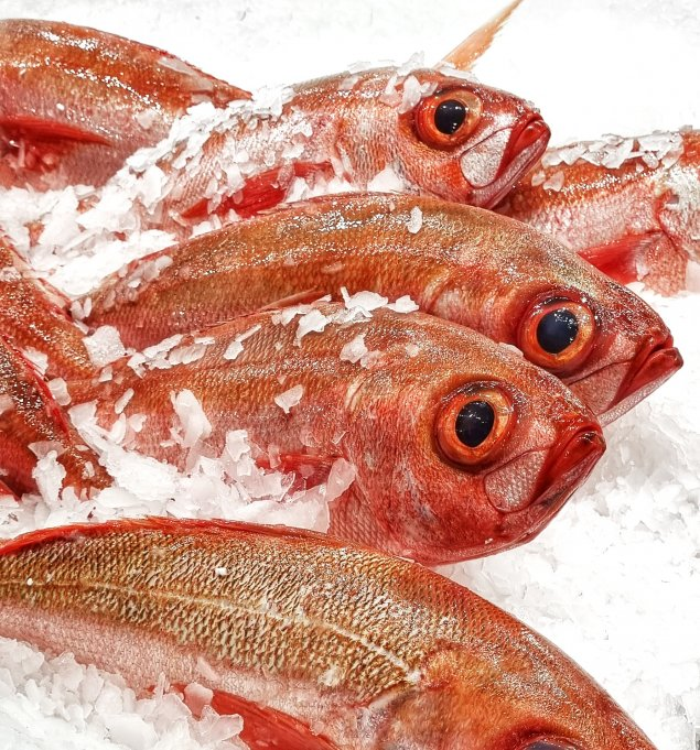 Whole Ruby Snapper (1.1 - 1.3kg)