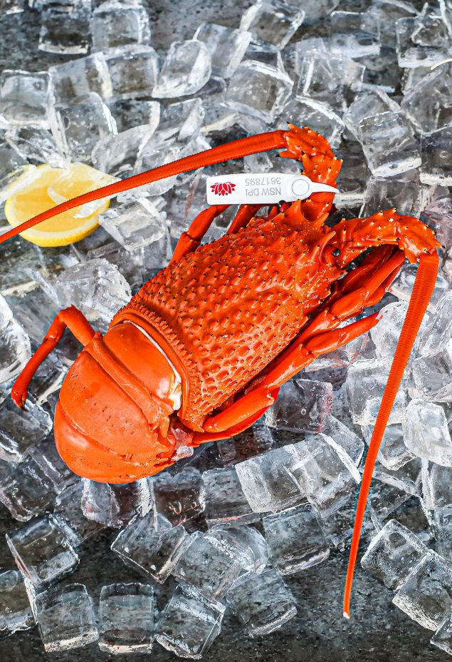 Cooked Local Lobster (Min 700g Each)