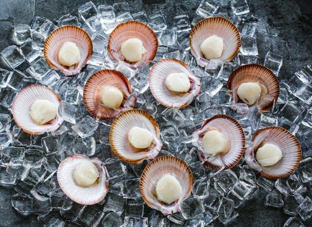 Half Shell Scallops Roe-Off (1 Dozen)
