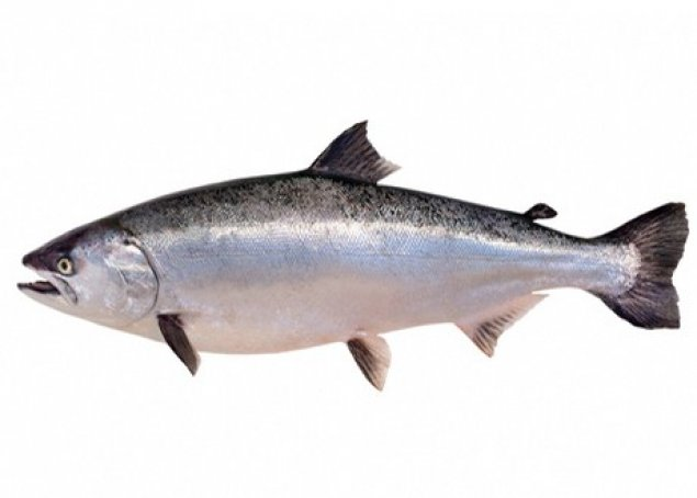Whole NZ King Salmon (Min 5kg)