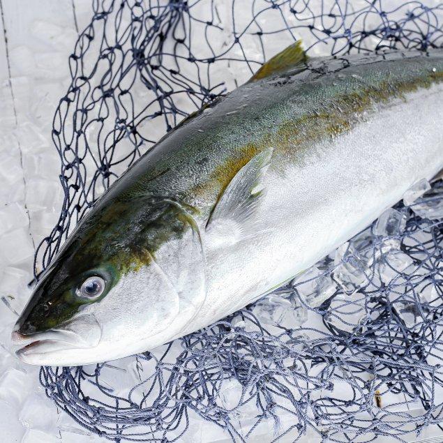 Whole Hiramasa Kingfish (Min 4.5kg)
