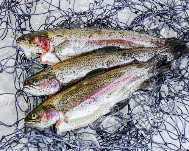 Whole Rainbow Trout (700-800g)