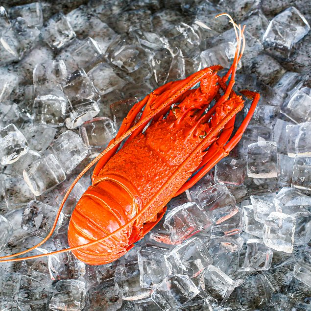 Cooked WA Lobster (Min 500g Each)