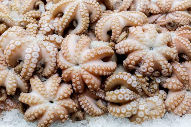 Medium Octopus 1kg