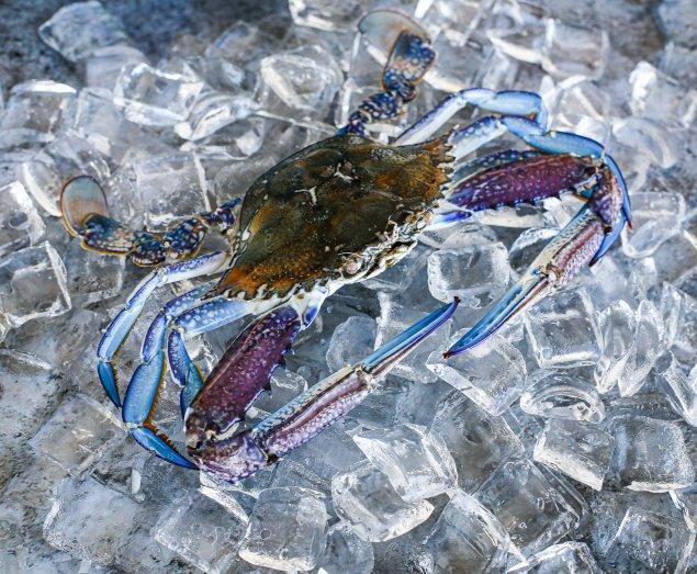 Raw Blue Swimmer Crab (Min 300g Sold Each)