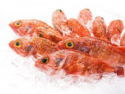 Whole Ocean Perch (Min 1kg)