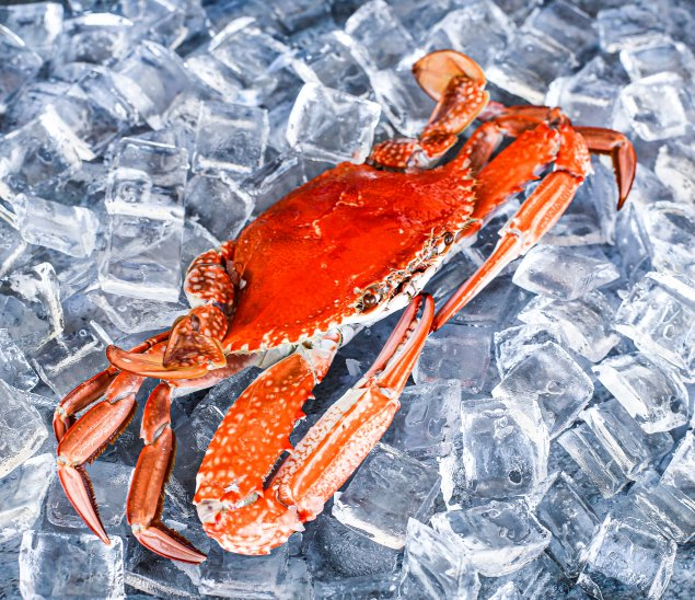 Cooked Blue Swimmer Crab (Min 200-300g Sold Each)