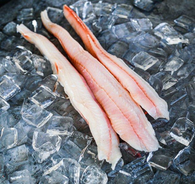 Shark Fillet (Select Size)