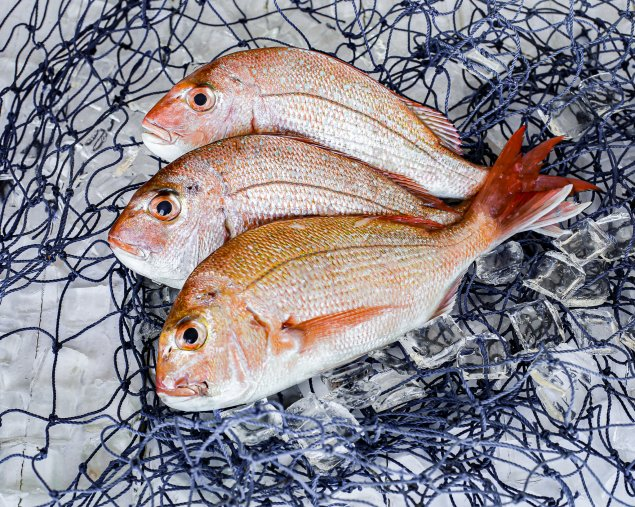 Whole Snapper - Plate Size (Min 450-600g)