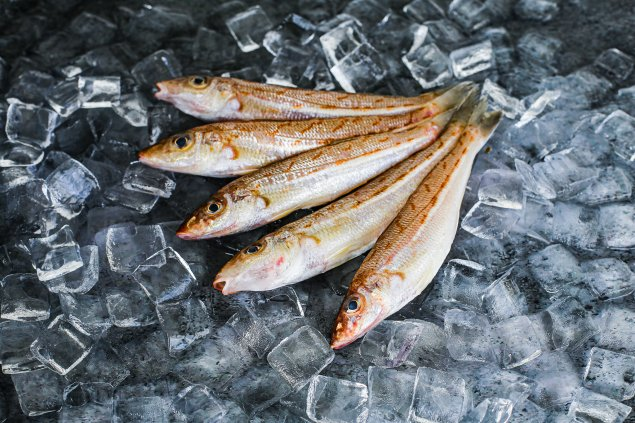 Whole Eastern School Whiting (500 Gr)